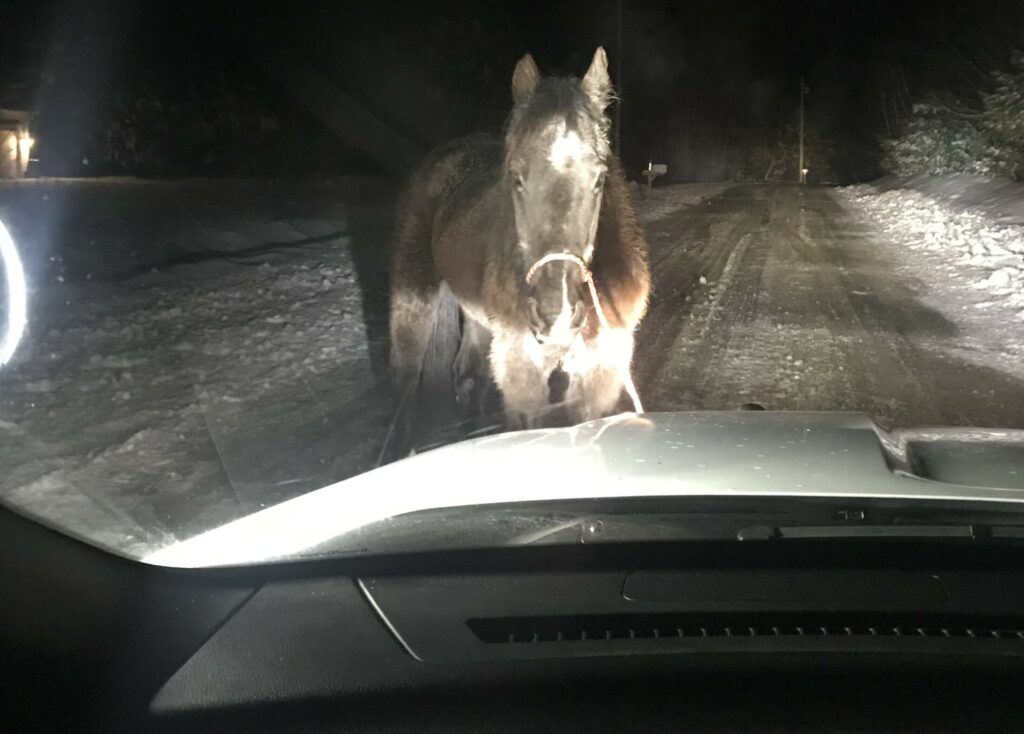 A York County Sheriff's Office sergeant encountered this wayward horse on Route 25 in Cornish on Tuesday morning around 3 a.m. Wrangling ensued.