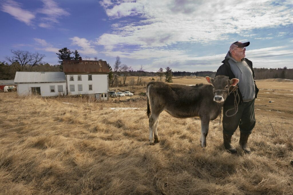 Arundel dairy farmer Fred Stone holds his Brown Swiss Lida Rose in this March 2019 photo. Stone says his fields have been contaminated by sludge he had spread on the fields to help the soils.