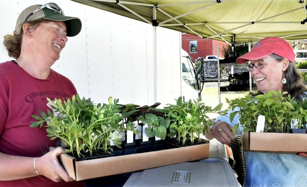 At the Waterville Farmers Market in May 2019, Hanne Tierney, of Cornerstone Farm in Palmyra, hands boxes of seedlngs to Mary Dunn, right. Tierney was one of more than 70 farmers who received a grant to help allay the impact of the coronavirus on her business.