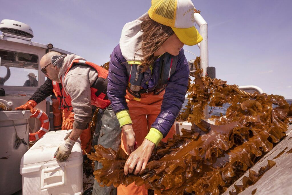 SACO BAY, ME - MAY 22: Adam St. Gelais, left, moves a cooler while Gretchen Grebe cuts a section of kelp aboard a boat in Saco Bay on Wednesday, May 22, 2019. St. Gelais is a researcher at the University of New England and Grebe is a University of Maine Ph.D candidate in Aquaculture and Aquatic Resources and is working with the University of New England, which received a $1.3 million grant from the Department of Energy to see if seaweed can be farmed in the open ocean. (Staff photo by Gregory Rec/Staff Photographer)