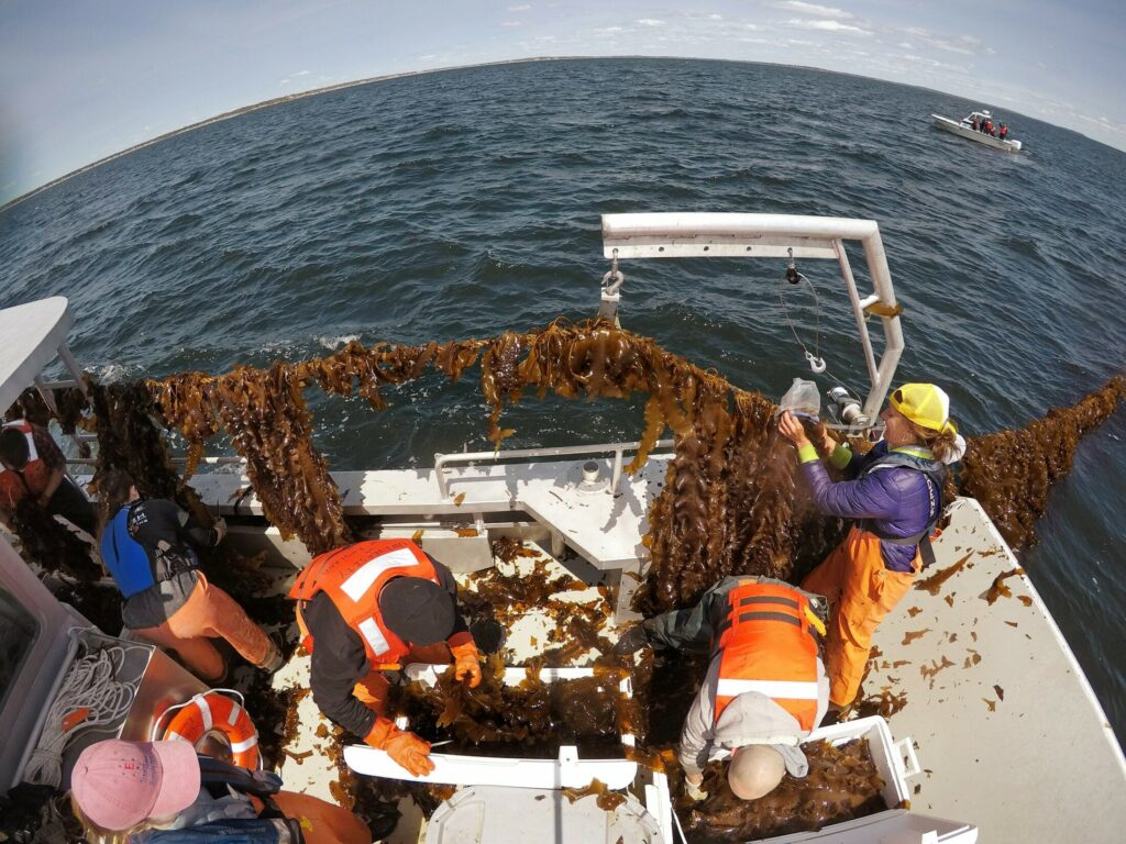 SACO BAY, ME - MAY 22: In this fish-eye view photograph, people harvest kelp from a rope and place it into coolers aboard a boat in Saco Bay on Wednesday, May 22, 2019. The University of New England created the seaweed farm, using a $1.3 million grant from the Department of Energy, which wants to assess the ability of kelp to be grown in open ocean conditions. From right are Gretchen Grebe, Adam St. Gelais, Barry Costa-Pierce, Emma Jones and Liz Johndrow. (Staff photo by Gregory Rec/Staff Photographer)