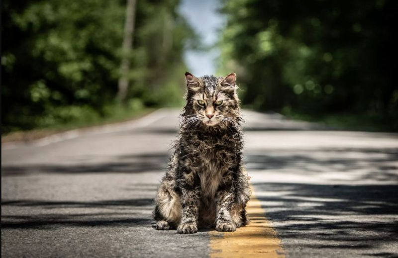 """Leo the cat portrayed Church the cat in the 2019 remake of """"Pet Sematary."""""""