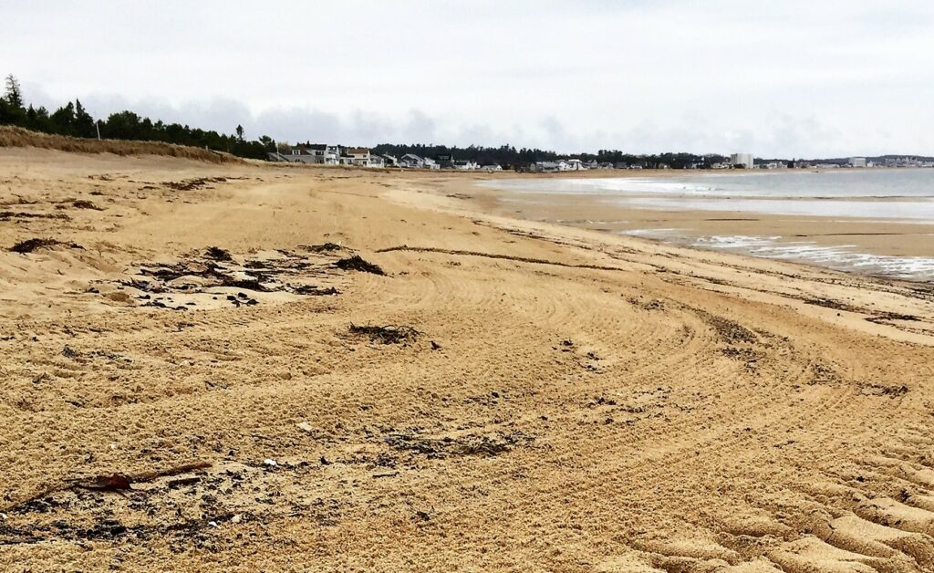 The beach in Saco cleared of woody debris after the Army Corps' clean up in April.