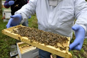 Dying_Bees_74198