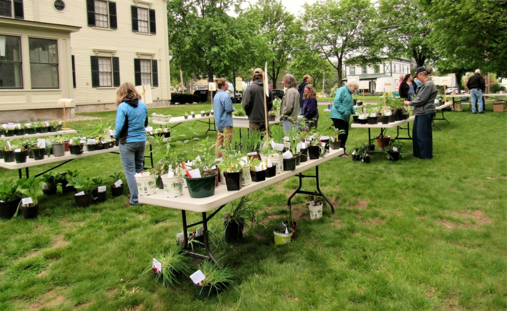 A pre-pandemic plant sale at the Bethel Library in 2019. This year, plants sales are a mix of advance online ordering and just show up and buy.