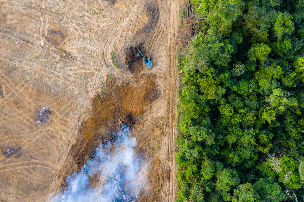Rainforest is removed to make way for palm oil and rubber plantations.