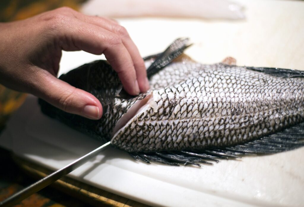 Black sea bass is one fish that diners could be seeing more frequently on menus in the future. The mid-Atlantic species already has started moving north into Gulf of Maine waters as the Atlantic Ocean warms.