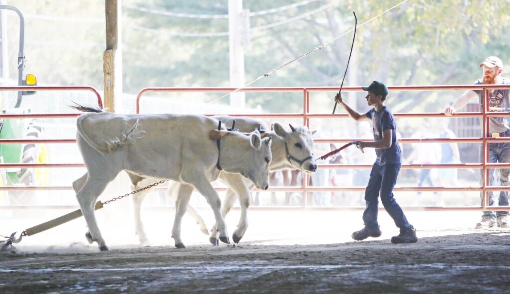 Organizers of the Cumberland County Fair are continuing to evaluate whether to hold the fair this year. That would mean youth like Layne Mullen, 13, of Tunbridge, VT., shown above in 2015, would not be able to show the livestock they've raised at the fairground.
