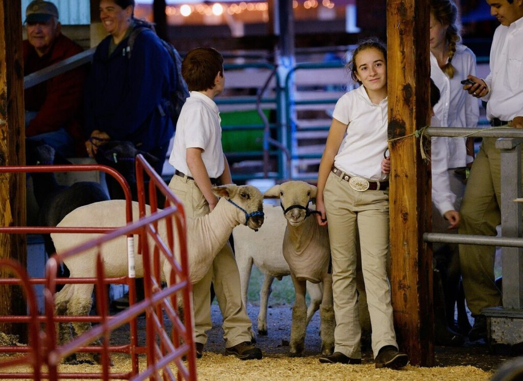 Fourteen-year-old Natallie Domin waits for her turn to auction off her lamb, Buddy, at the 2015 Cumberland Fair. To the left is her brother Ethan, 11.