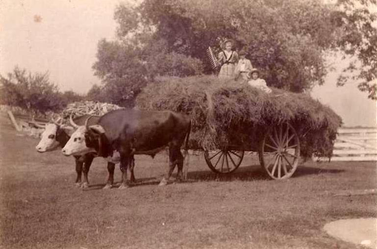 Three children from the Fogg family riding on a newly harvested load of hay in 1890 at the Fogg Homestead, Readfield. The wagon is being hauled by Samuel Gove Fogg's prize-winning Herefords. A presentation by Dale Potter-Clark about living, working and socializing in Readfield during the 19th century will be held from 6:30 to 8 p.m. Oct. 16, sponsored by  Maranacook Adult and Community Education.