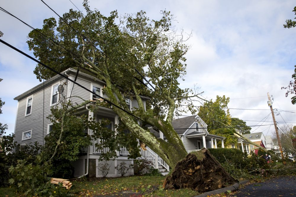 A tree fell onto a house in Danvers, Mass., during the overnight storm that began Wednesday.