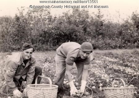 POWs picking spuds in 1945 at Lunn Farm.