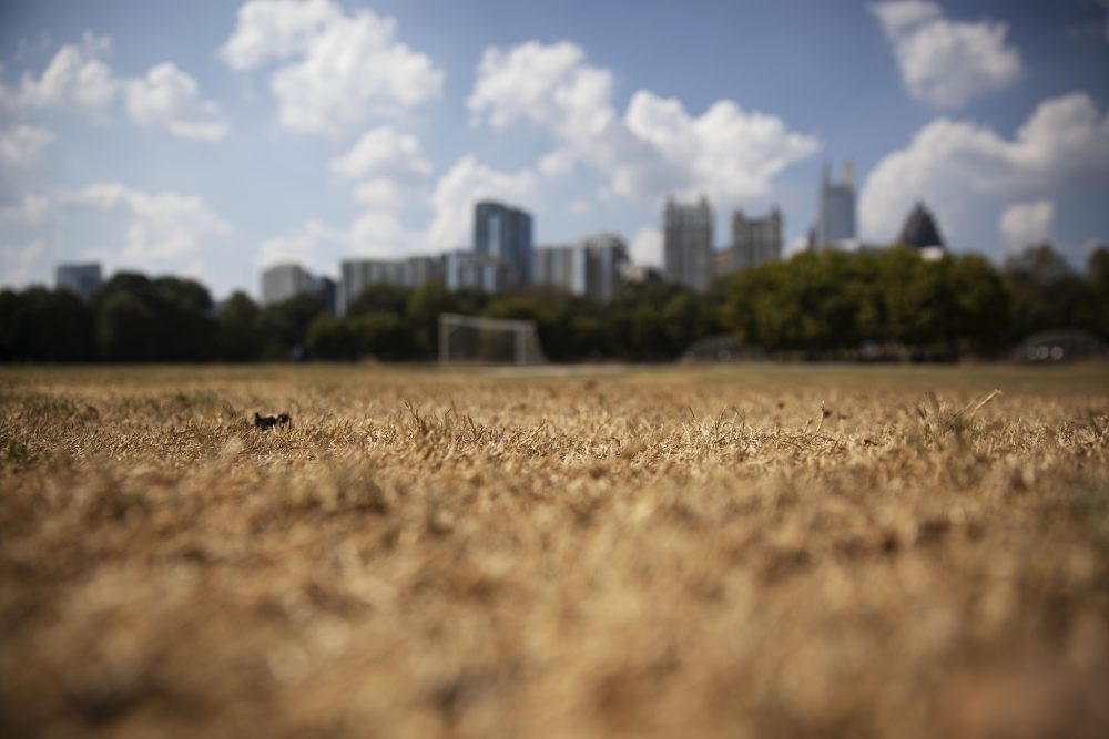 Dry grass from a lack of rain lays beneath the Midtown skyline in Atlanta on Thursday. The current drought has put stress on a variety of crops across the South, including cotton in Alabama, peanuts in Georgia and tobacco in Virginia.