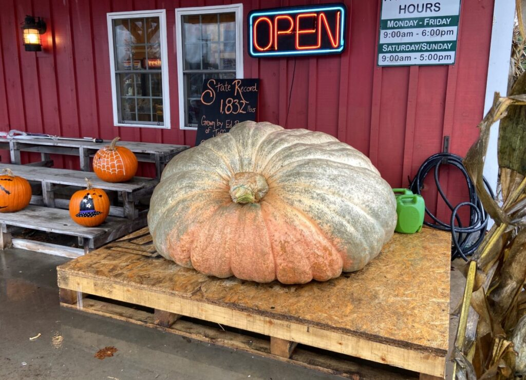 Edwin Pierpont's prized pumpkin, which weighs 1,832.5 pounds, sits at the Spear's Farmstand on Route 1 in Waldoboro on Thursday morning.