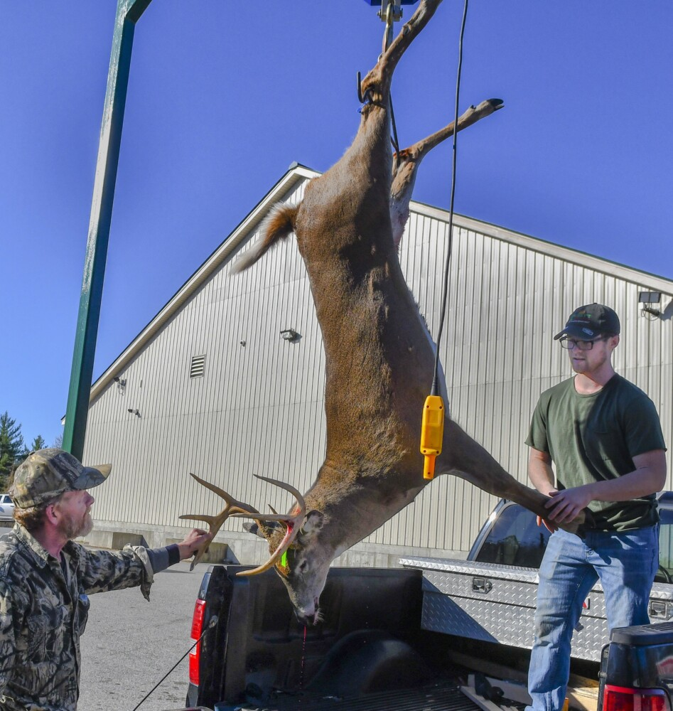 Adam Woodard, left, and store employee Dakotah Labreck weigh the 198-pound deer that Woodard brought in to be tagged Saturday at Tobey's Grocery in China. Saturday was the first of firearms deer hunting season and was only open to Maine residents.