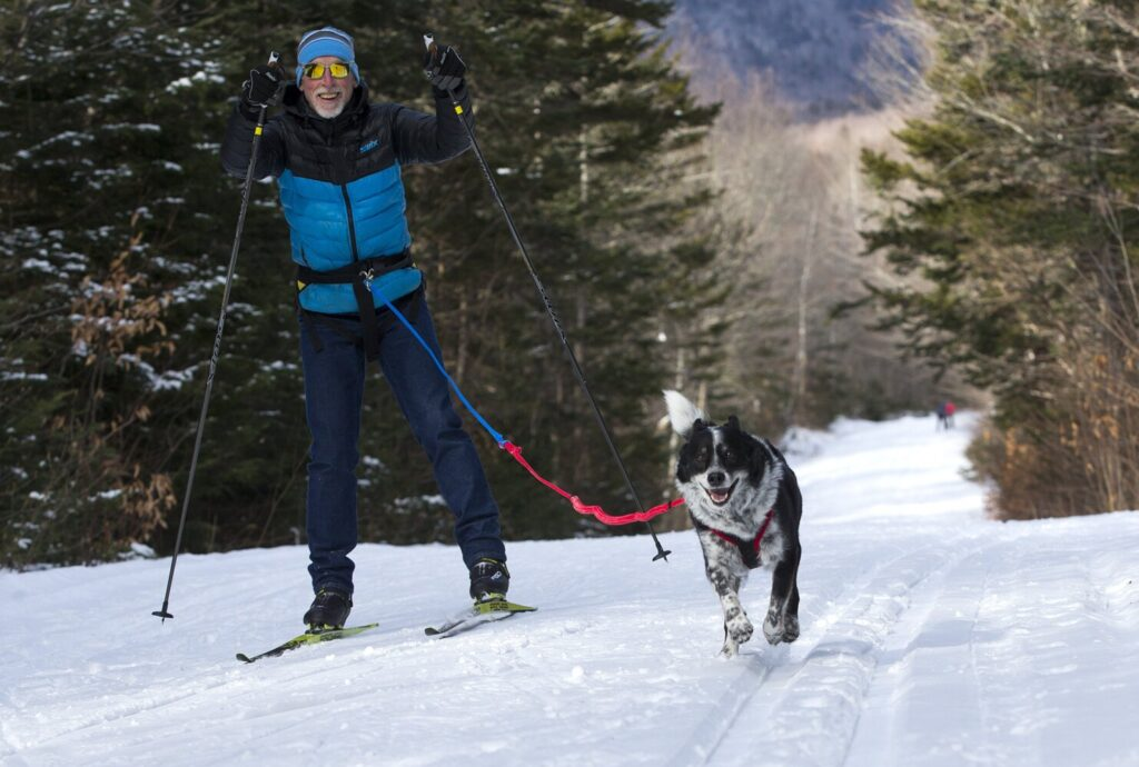 Jack Steffen, an avid skier and dog sled musher, demonstrates how to skijor at the Jackson Ski Touring Center in Jackson, New Hampshire. The center rents skijoring equipment for cross-country skiers (and their four-legged friends) to try.