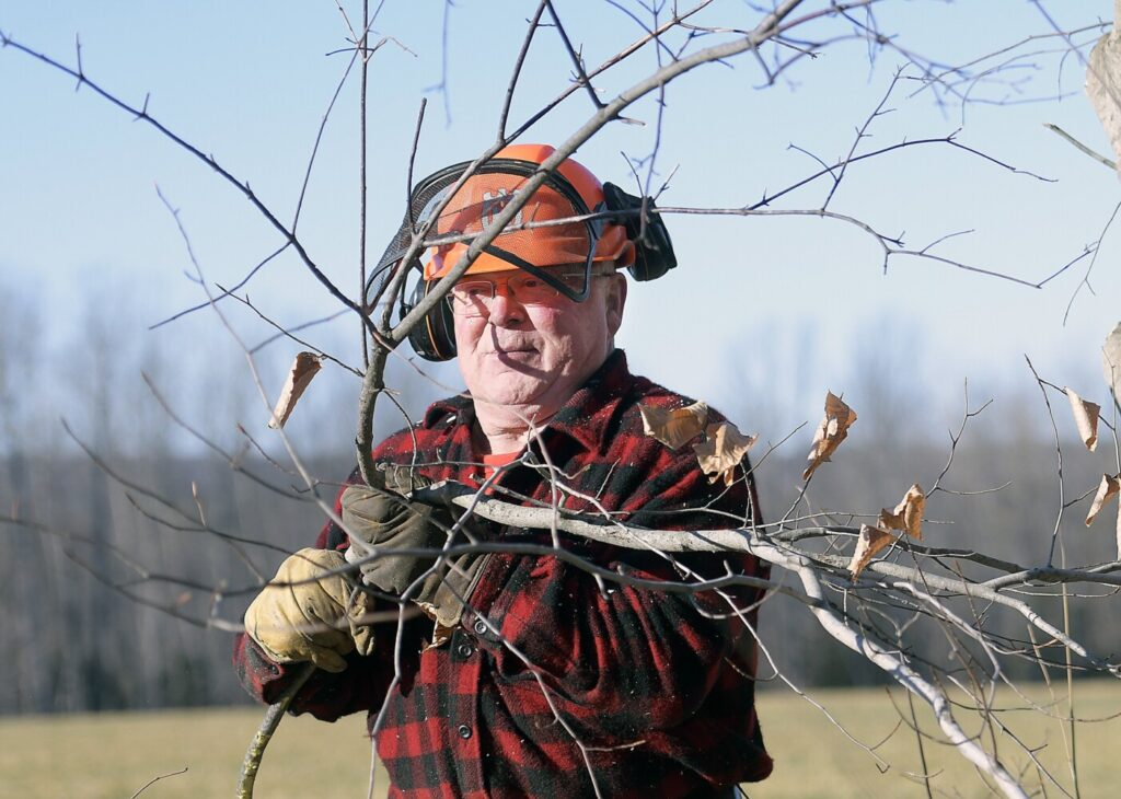 Tom Jacobs clears trees Wednesday from a stone fence along a field he hays in Readfied.