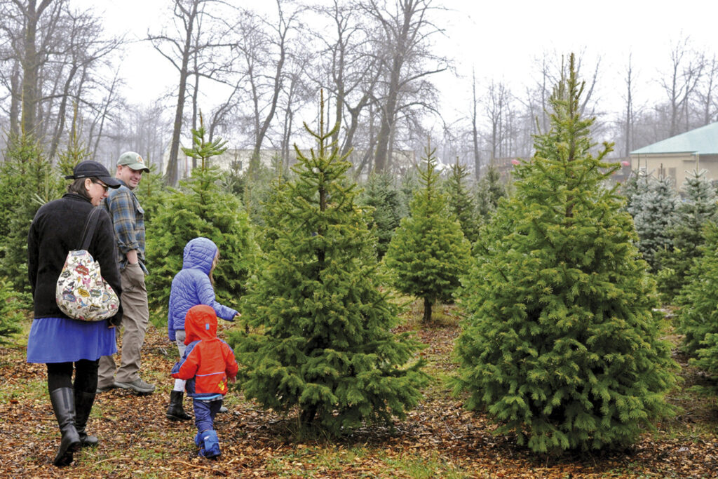 A family searches for a tree Nov. 29 in the only Christmas tree farm in Kodiak, Alaska.