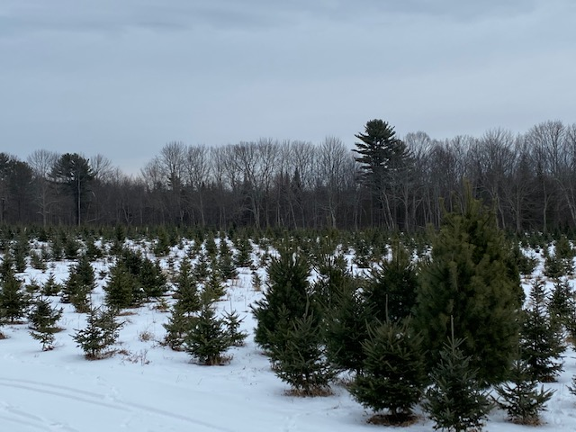 Christmas Gift Learning To Tree Farm