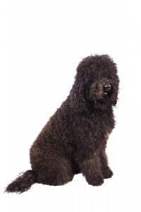 Dogs_New_Breeds_42179
