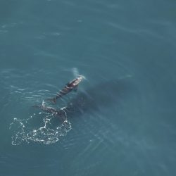 Right_Whales__99192