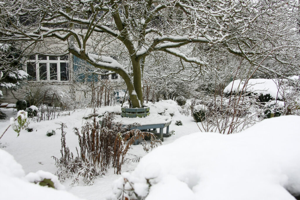 Homeowners often think of spring, summer and fall when they are planting a garden. But your garden can look lovely in the coldest months, too.