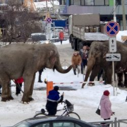 Russia_Elephant_Escape_93282