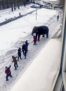 Russia_Elephant_Escape_93349
