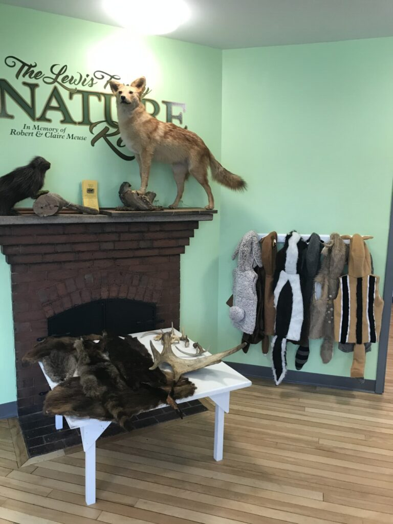 Part of the new Nature Room exhibit focused on Maine wild animals at the Western Maine Play Museum in Wilton.