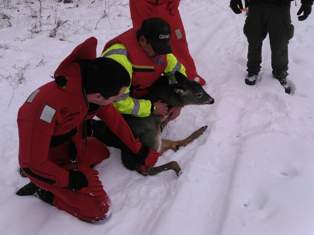 Brad Bosworth, left, and Madison Fire Department Deputy Chief Dan Bosworth hold the deer after it was rescued from the frozen Kennebec River.