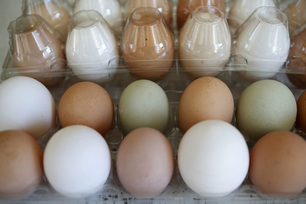 Cage_Free_Eggs_00017