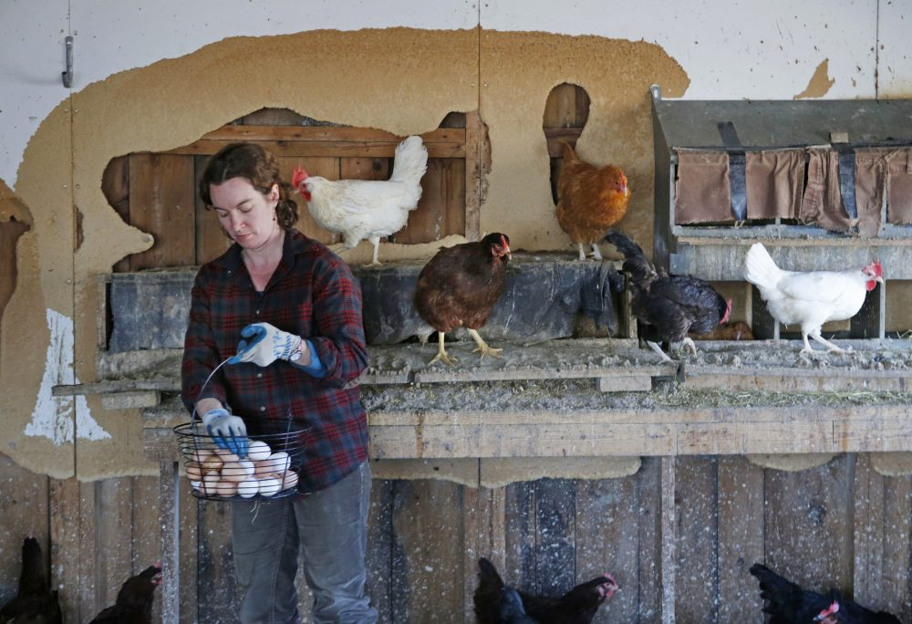 Heather Retberg collects eggs at the Quill's End Farm in Penobscot in April 2016. Maine might join a growing number of states that require cage-free facilities for chickens that lay eggs for commercial consumption.