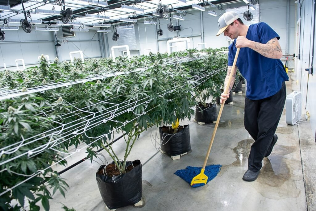 Garrett Durham mops the floor of the flowering grow room in the Atlantic Cannabis Collective operation in Auburn. Durham says that he cleans the space daily to prevent disease and pests.