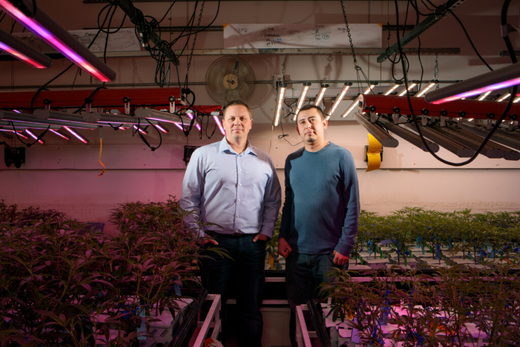 Brian Cusworth, director of operations, and employee Chris Baca at the Clinic in Denver, a licensed marijuana growing facility using carbon dioxide produced by the beer brewed at the nearby Denver Beer Co.
