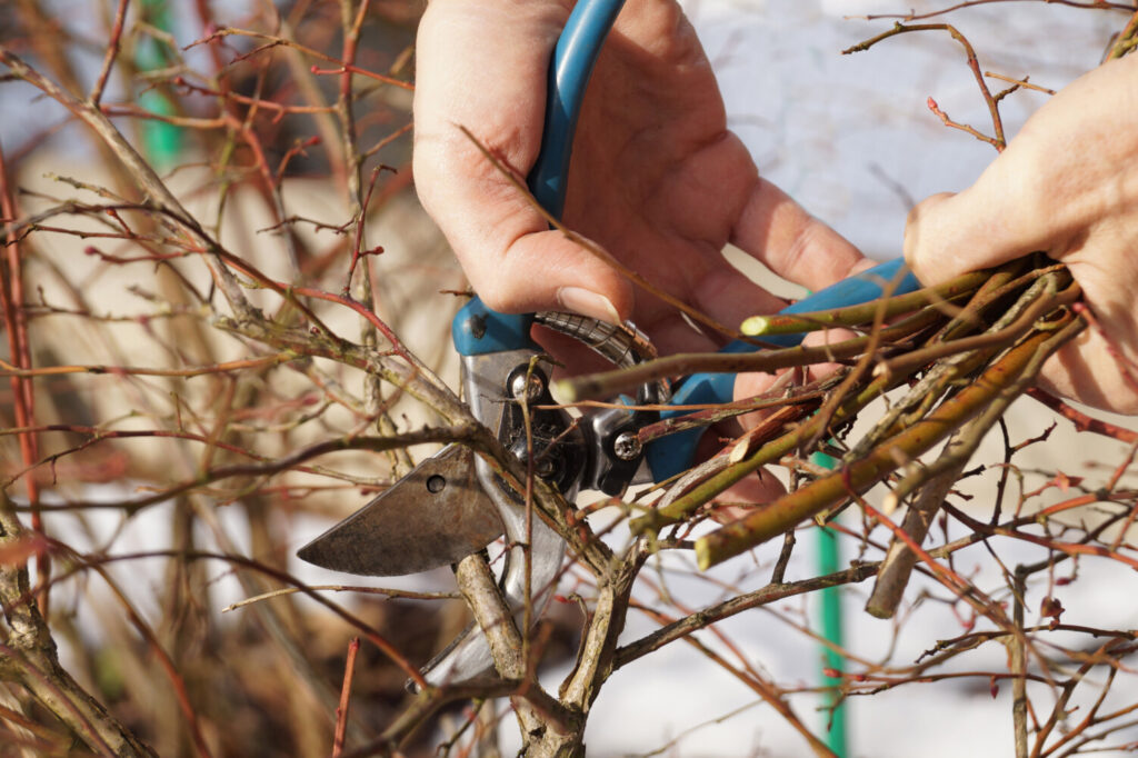 Don't delay. The best time to prune shrubs is late winter/early spring.