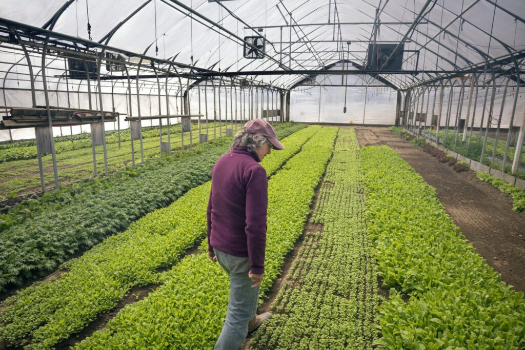 Lisa Turner, owner of Laughing Stock Farm in Freeport, walks through one of the farm's greenhouses on Tuesday, April 21, 2020. Normally, Turner sells her vegetables to restaurants but with most of them closed due to the coronavirus, she has started selling directly to customers out of her farm stand.