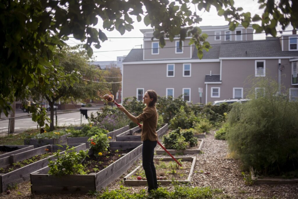 Community gardens, like this one on Oxford Street in Portland, are re-evaluating their procedures to ensure gardeners can keep their social distance and stay safe.