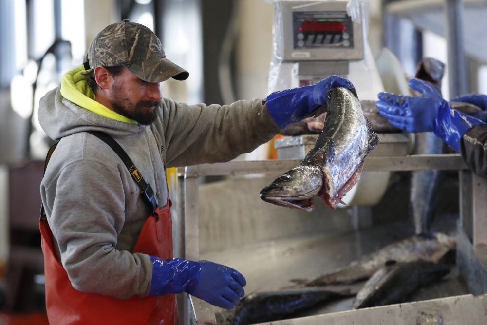 A worker weighs and sorts pollack at the Portland Fish Exchange in Portland. The seafood industry has been upended by the spread of coronavirus, which has halted sales in restaurants and sent fishermen and dealers scrambling for new markets for their products.