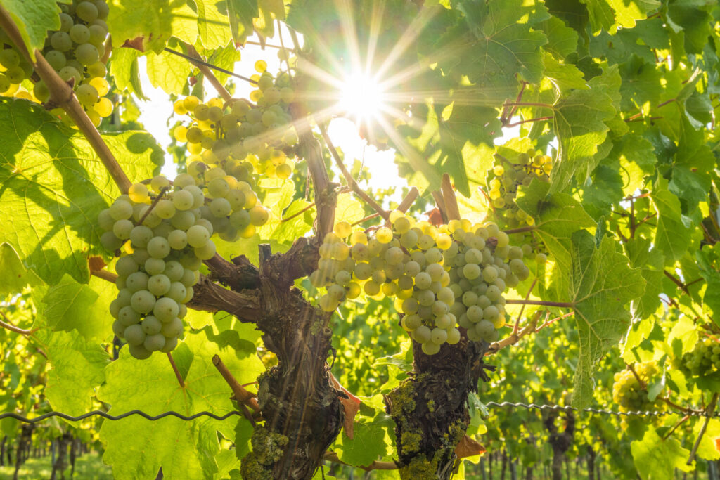At an international conference in February, the wine industry examined its practices in light of climate change.