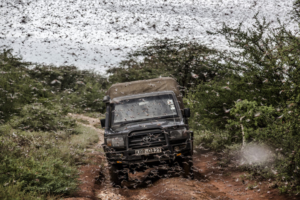 A massive swarm of locust surrounds a car in an area next to Archers Post, Kenya, on April 24. The pests have returned in a second wave.