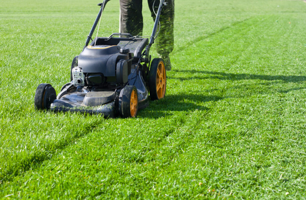 Lawns are not good for the environment. They require a lot of water, mowing (typically with gas-powered mowers) and chemicals to keep the weeds down. Beyond these, they provide little food or shelter for pollinators and other animals. Why not shrink your lawn?
