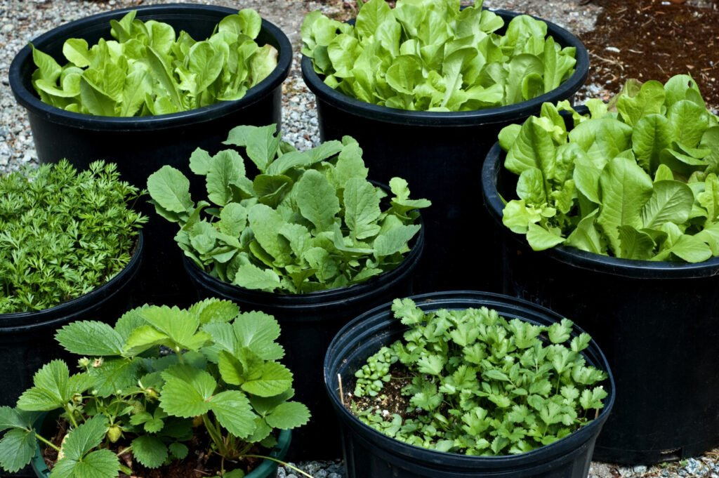 You can grow all sorts of things in containers, including the lettuce, herbs and strawberries pictured here.