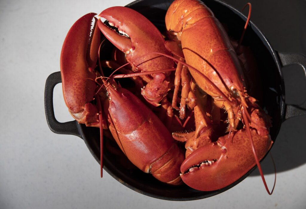 Cook it once. Eat it twice: lobster for dinner and breakfast.