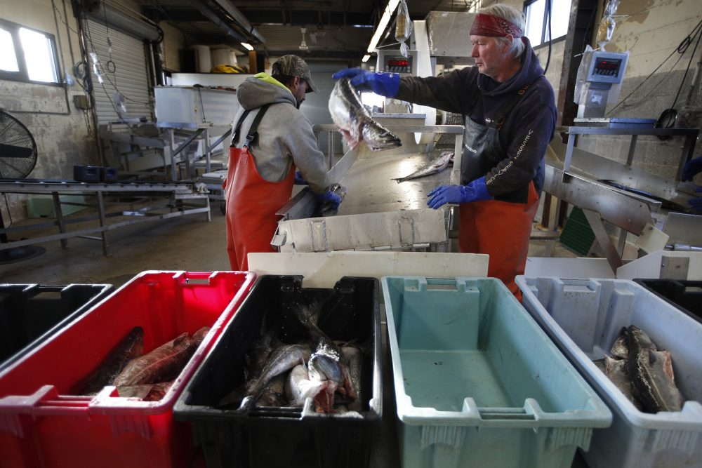 A small load of pollack is sorted as it comes off a boat at the Portland Fish Exchange in Portland on March 25. Fishing dropped from March 11 to April 28 because of concern about spreading the virus on boats and because of decreased demand for seafood.