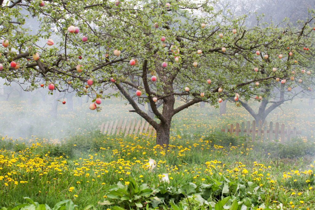 Plant happiness and a steady food supply. Plant a peach tree. Gardening columnist Tom Atwell has one on his property.