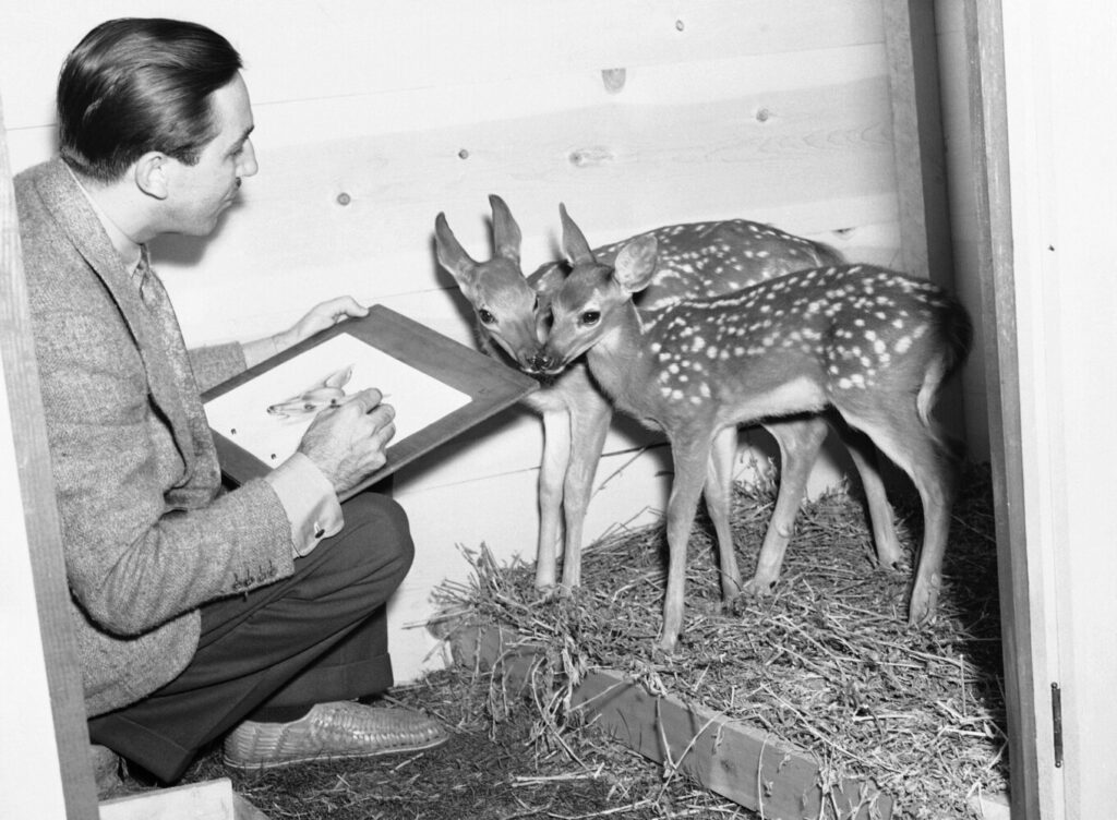 "Walt Disney sketches two 12-week-old fawns that will act as the models for the hero and heroine of Disney's new production, ""Bambi,"" in Hollywood, Calif. in July 1938."