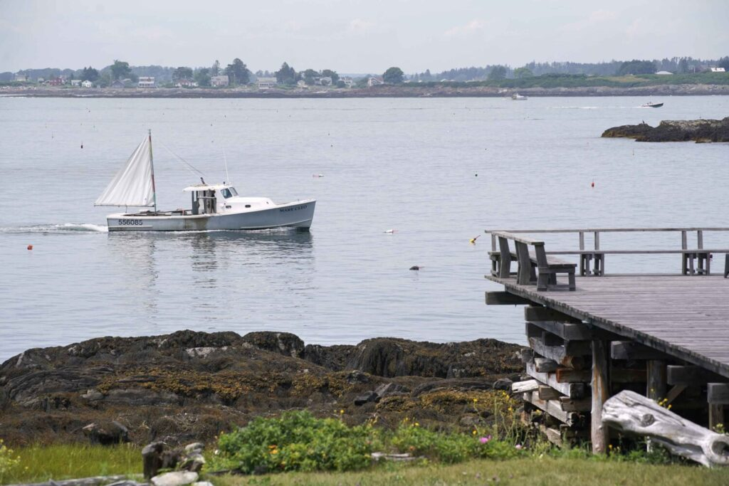 In Mackerel Cove off Bailey Island on Tuesday, a lobster boat passes near where a great white shark attacked and killed a woman on Monday afternoon.