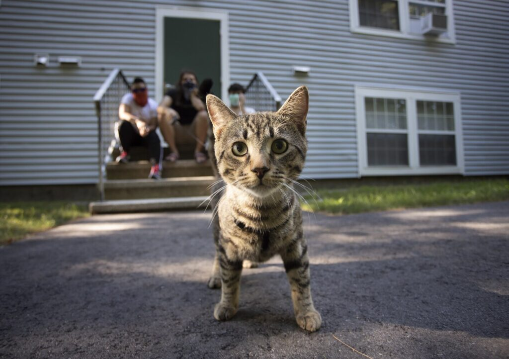Covi, a young cat who showed up at the home of Richard Reynolds and Sosanya Pok in Scarborough.