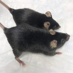 Space_Mighty_Mice_23031
