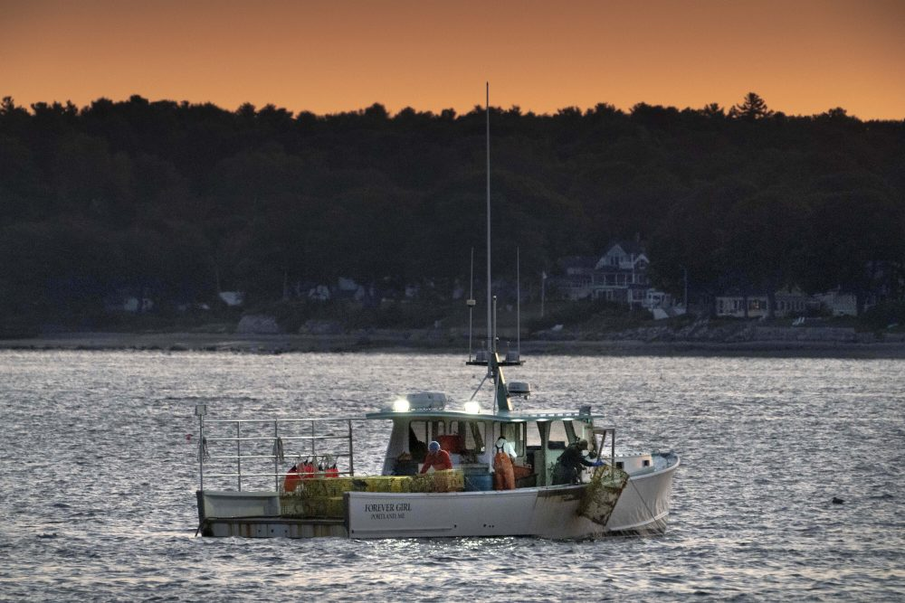 The crew on a lobster boat hauls traps at sunrise Sept. 21 off Portland.